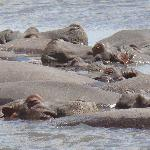 Hippo relax