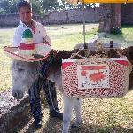 Mexico La Muralla el Burro con el Alipus