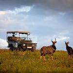 Abundant game, easily viewed from the open game drive vehicle