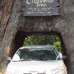 My car 2008