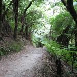 Queen Charlotte Track - 2 mins walk