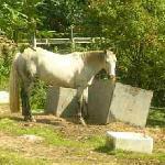 Lottie the Horse at Shaw Farm