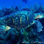 Diving with the turtles!