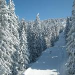great skislopes with beautiful trees