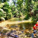10 minutes easy drive to Laceys Creek rainforest swimming area - pristine rainforest creek in Wo