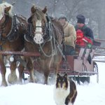 Sleigh ride coming back to the barn.