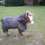 The biting pony