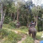 Riding through the jungle