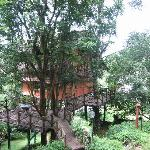 A Tree house in the property