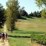trail walk in the vineayrd