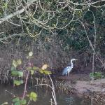 Heron seen on the estuary walk.