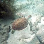 Turtle seen during one of the day trips