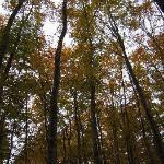 ブナの木がこんなに高いとは思わなかった