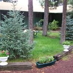 Courtyard with beautiful Pine Treeas