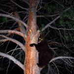 The bear we saw from outside our restaurant!!!