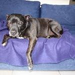 Karin's lovely lazy Dog :)