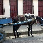 Typical horse cart