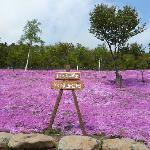 芝桜公園の看板