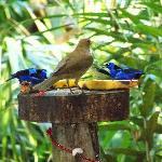 Our breakfast buddies!