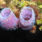 Beautiful colors underwater