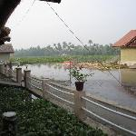 View from the entrance of the room - volley ball court and hyacinth covered lake