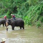 The Elephant Training Center Chiang Dao Foto