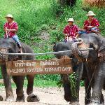 Maesa Elephant Camp 1