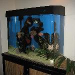 Fish tank in lobby of CJ's