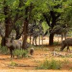 Riserva Edeni(Parco Kruger)