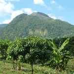 Part of the fruit plantation - they have over 60 different kinds of fruit and all organic!