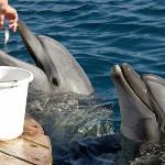 Dolphin Reef -Eilat