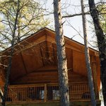 """Cabins and Suites In The Treetops"""