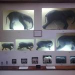 Museo de Historia Natural Mozambique fetos de elefante