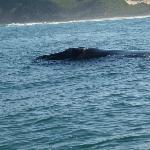 Whale nearby Knysna