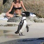 Foto de Boulders Beach