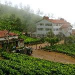 La plantation de thé à 2600m d'altitude. (Kokullumalai)