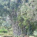 Entrée majestueuse avec bambous géants