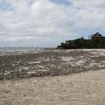 Seegrasplage