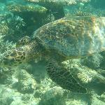 Underwater life amazing