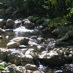 The stream running through Lithia park in Ashland.