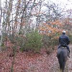 Horse riding through the Tuscany woods!!!