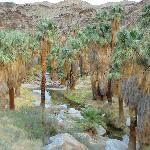 Palm Canyons are a must-see when you're anywhere near Palm Springs