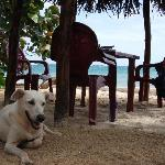 Dogs and Beachfront seating