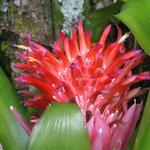 Hale Moana Hawaii Bed & Breakfast - Garden - Bromeliad