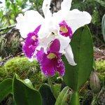 Hale Moana Hawaii Bed & Breakfast - Garden - Orchids