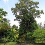 Hale Moana Hawaii Bed & Breakfast - Tropical Gardens