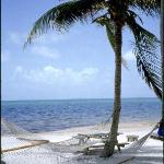hammock on the beach under palm tree