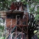 how often to you get to stay in a real tree house?