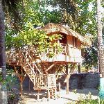 Native Treehouse