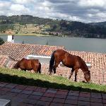 Hotel's horses in our cabana's backyard